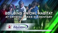 Crystal Lakes Owls